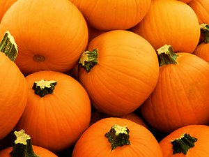 Blog. pumpkin